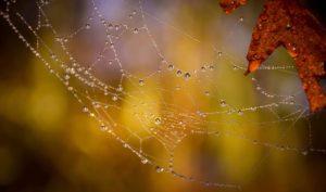 Toile d'araignée légende huronne